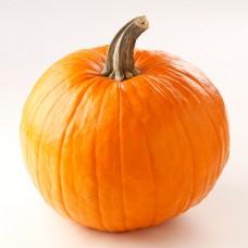 Halloween Media