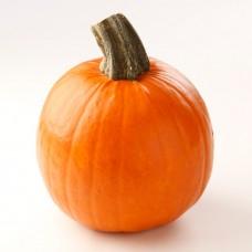 Halloween Piccola
