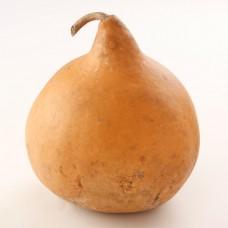 Semi Cipolla
